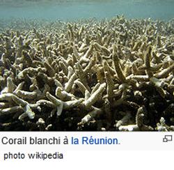 corail blanchi