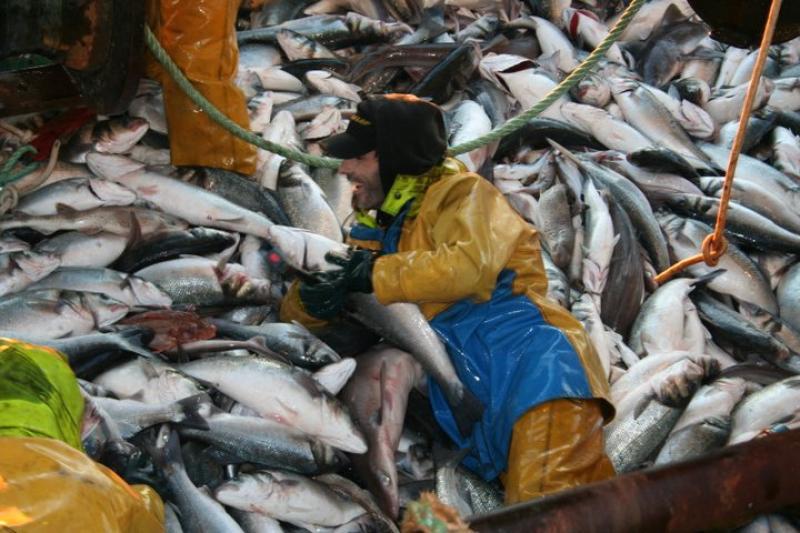 Pêche sur frayères à gros bars
