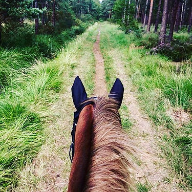 What better way to explore the woods tha
