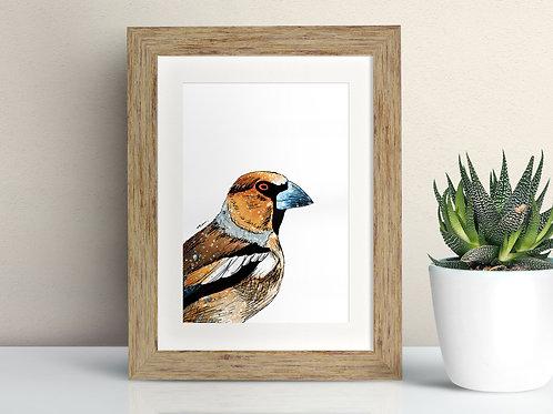 Hawfinch framed art illustration by Rebecca Sawyer at R.Sawyer Designs