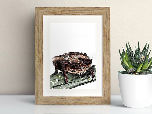 Pipistrelle Bat framed art illustration by Rebecca Sawyer at R.Sawyer Designs