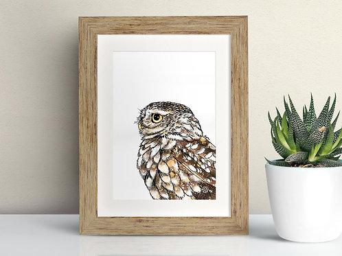 Little Owl framed art illustration by Rebecca Sawyer at R.Sawyer Designs