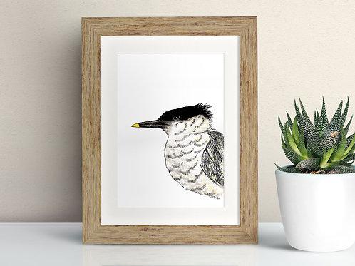 Sandwich Tern framed art illustration by Rebecca Sawyer at R.Sawyer Designs