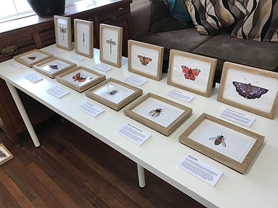 Insects Table