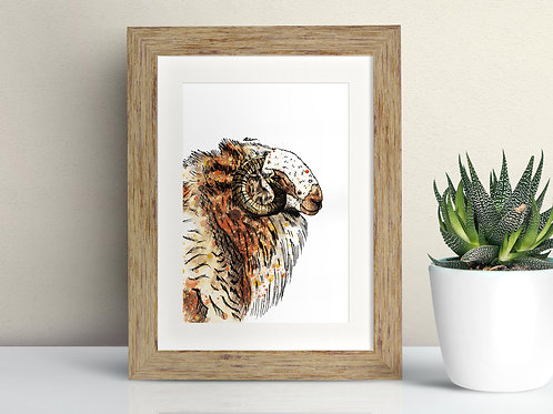 Welsh Mountain Sheep framed art illustration by Rebecca Sawyer at R.Sawyer Designs