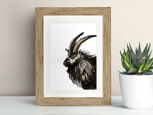 Mountain Goat framed art illustration by Rebecca Sawyer at R.Sawyer Designs
