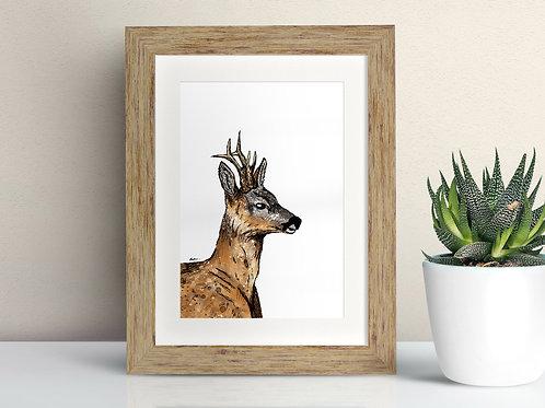 Roe Deer framed art illustration by Rebecca Sawyer at R.Sawyer Designs