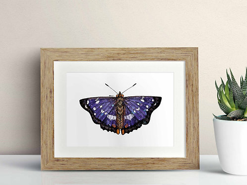 Purple Emperor Butterfly framed art illustration by Rebecca Sawyer at R.Sawyer Designs