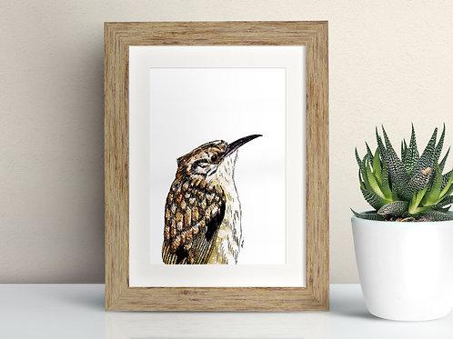 Treecreeper framed art illustration by Rebecca Sawyer at R.Sawyer Designs