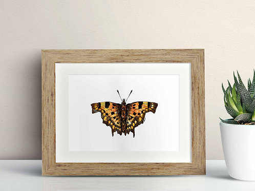Comma Butterfly framed art illustration by Rebecca Sawyer at R.Sawyer Designs