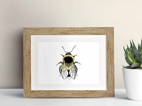 White-tailed Bumblebee framed art illustration by Rebecca Sawyer at R.Sawyer Designs