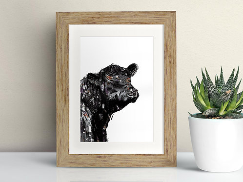 Welsh Black Cattle framed art illustration by Rebecca Sawyer at R.Sawyer Designs