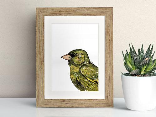 Greenfinch framed art illustration by Rebecca Sawyer at R.Sawyer Designs