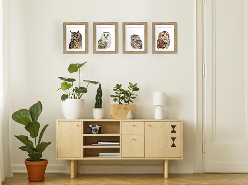 Pack of four framed Owl art illustrations by Rebecca Sawyer at R.Sawyer Designs