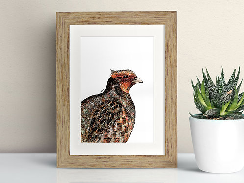 Grey Partridge framed art illustration by Rebecca Sawyer at R.Sawyer Designs