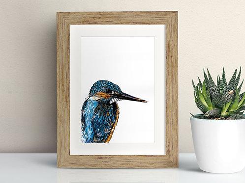 Kingfisher framed art illustration by Rebecca Sawyer at R.Sawyer Designs