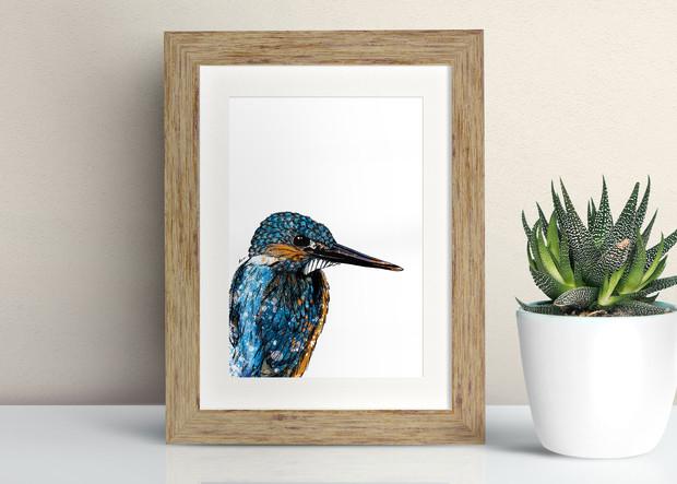 Framed Kingfisher illustration