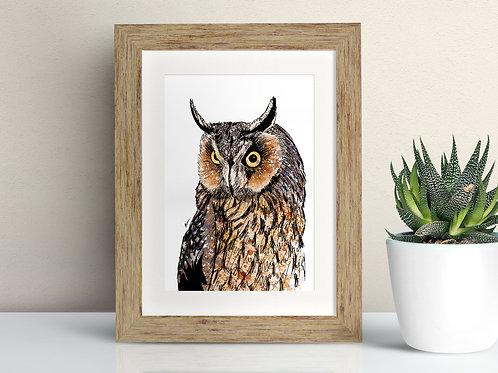 Long Eared Owl framed art illustration by Rebecca Sawyer at R.Sawyer Designs