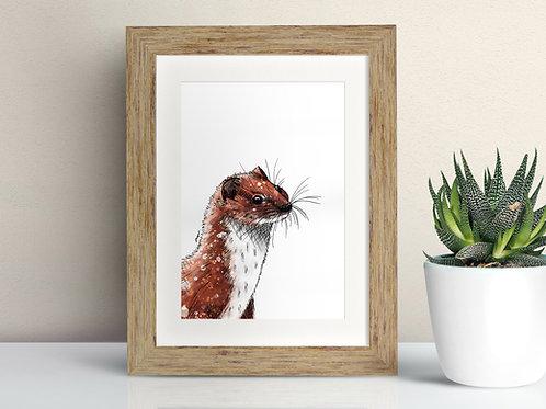 Weasel framed art illustration by Rebecca Sawyer at R.Sawyer Designs