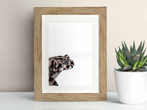 Natterjack Toad framed art illustration by Rebecca Sawyer at R.Sawyer Designs