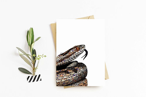 Adder greeting card by Rebecca Sawyer at R.Sawyer Designs