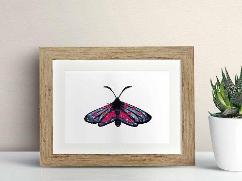 Five Spot Burnet Moth framed art illustration by Rebecca Sawyer at R.Sawyer Designs