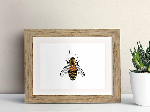Honey Bee framed art illustration by Rebecca Sawyer at R.Sawyer Designs