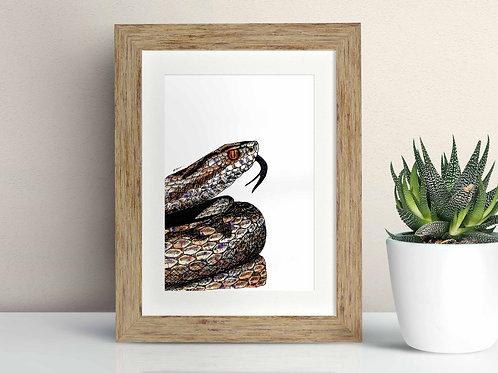 Adder framed art illustration by Rebecca Sawyer at R.Sawyer Designs