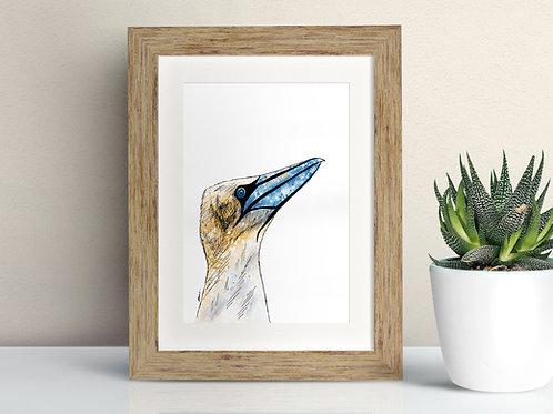 Gannet framed art illustration by Rebecca Sawyer at R.Sawyer Designs