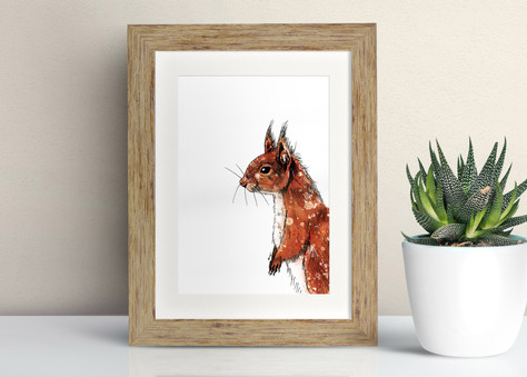 Framed Red Squirell