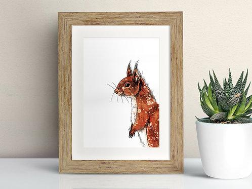 Red Squirrel framed art illustration by Rebecca Sawyer at R.Sawyer Designs
