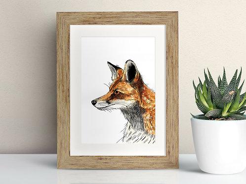 Red Fox framed art illustration by Rebecca Sawyer at R.Sawyer Designs