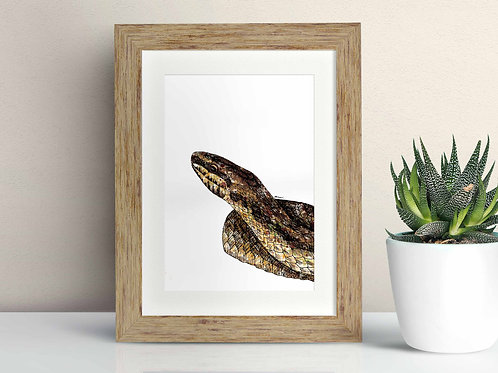 Smooth Snake framed art illustration by Rebecca Sawyer at R.Sawyer Designs