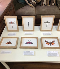Dragonflies and Moths
