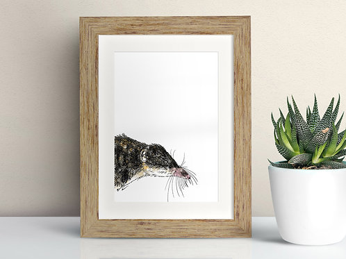 Common Shrew framed art illustration by Rebecca Sawyer at R.Sawyer Designs