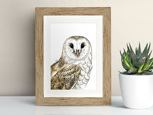 Barn Owl framed art illustration by Rebecca Sawyer at R.Sawyer Designs