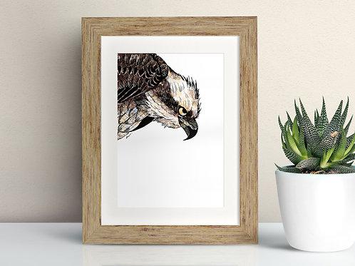 Osprey framed art illustration by Rebecca Sawyer at R.Sawyer Designs