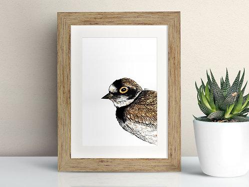 Little Plover framed art illustration by Rebecca Sawyer at R.Sawyer Designs