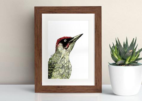 Framed Green Woodpecker illustration