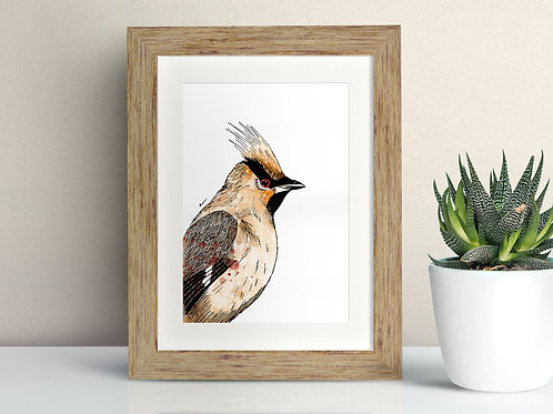 Waxwing framed art illustration by Rebecca Sawyer at R.Sawyer Designs