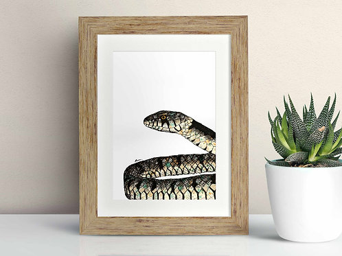Grass Snake framed art illustration by Rebecca Sawyer at R.Sawyer Designs