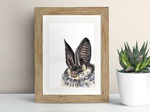 Long Eared Bat framed art illustration by Rebecca Sawyer at R.Sawyer Designs