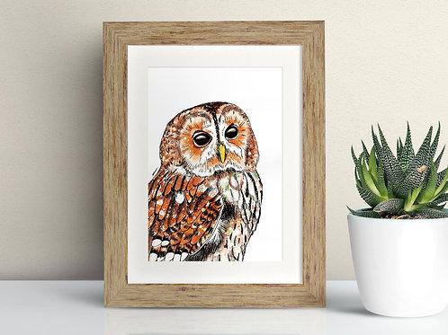 Tawny Owl framed art illustration by Rebecca Sawyer at R.Sawyer Designs
