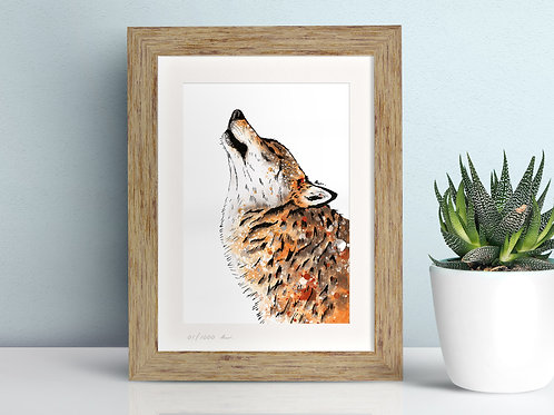 Eurasian Wolf limited edition framed art illustration by Rebecca Sawyer at R.Sawyer Designs