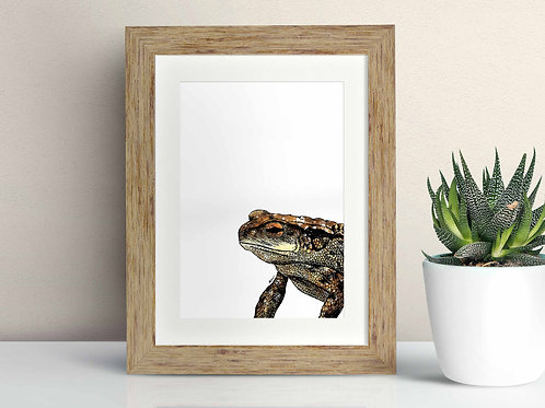 Common Toad framed art illustration by Rebecca Sawyer at R.Sawyer Designs
