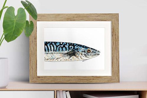 Mackerel framed art illustration by Rebecca Sawyer at R.Sawyer Designs