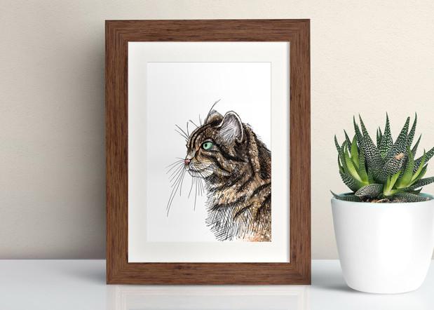 Framed Scottish Wildcat illustration
