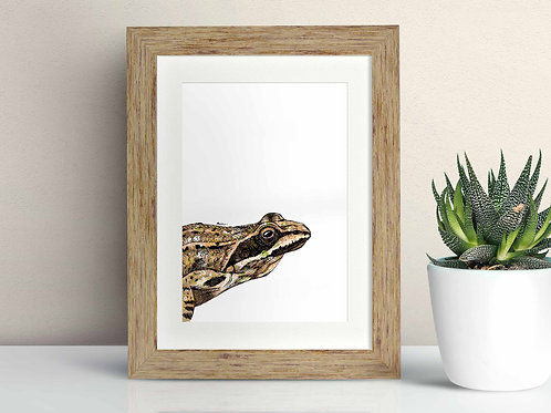 Common Frog framed art illustration by Rebecca Sawyer at R.Sawyer Designs