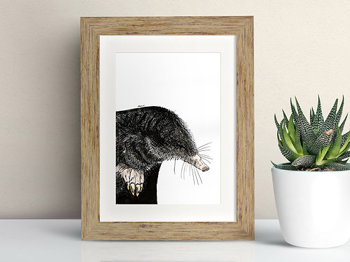 European Mole framed art illustration by Rebecca Sawyer at R.Sawyer Designs