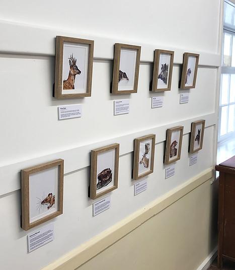 Mammals Display